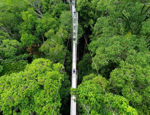 5 Adrenaline Pumping Activities at Ulu Temburong National Park