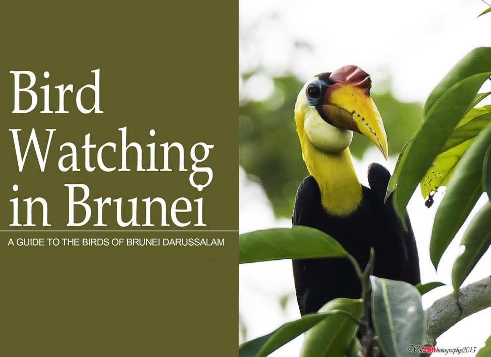 Bird watching in Brunei