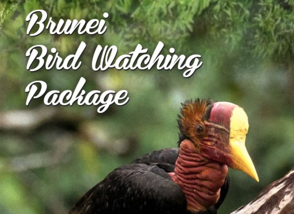 Brunei bird watching packages